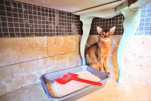 фотографии кошки и ее туалета от профессионального фотографа Виктора Борзых