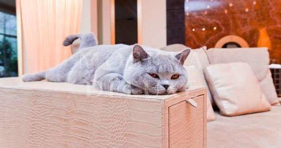 цена апартаментов могла бы быть снижена процентов на 90% :-) Плюшевый кот!
